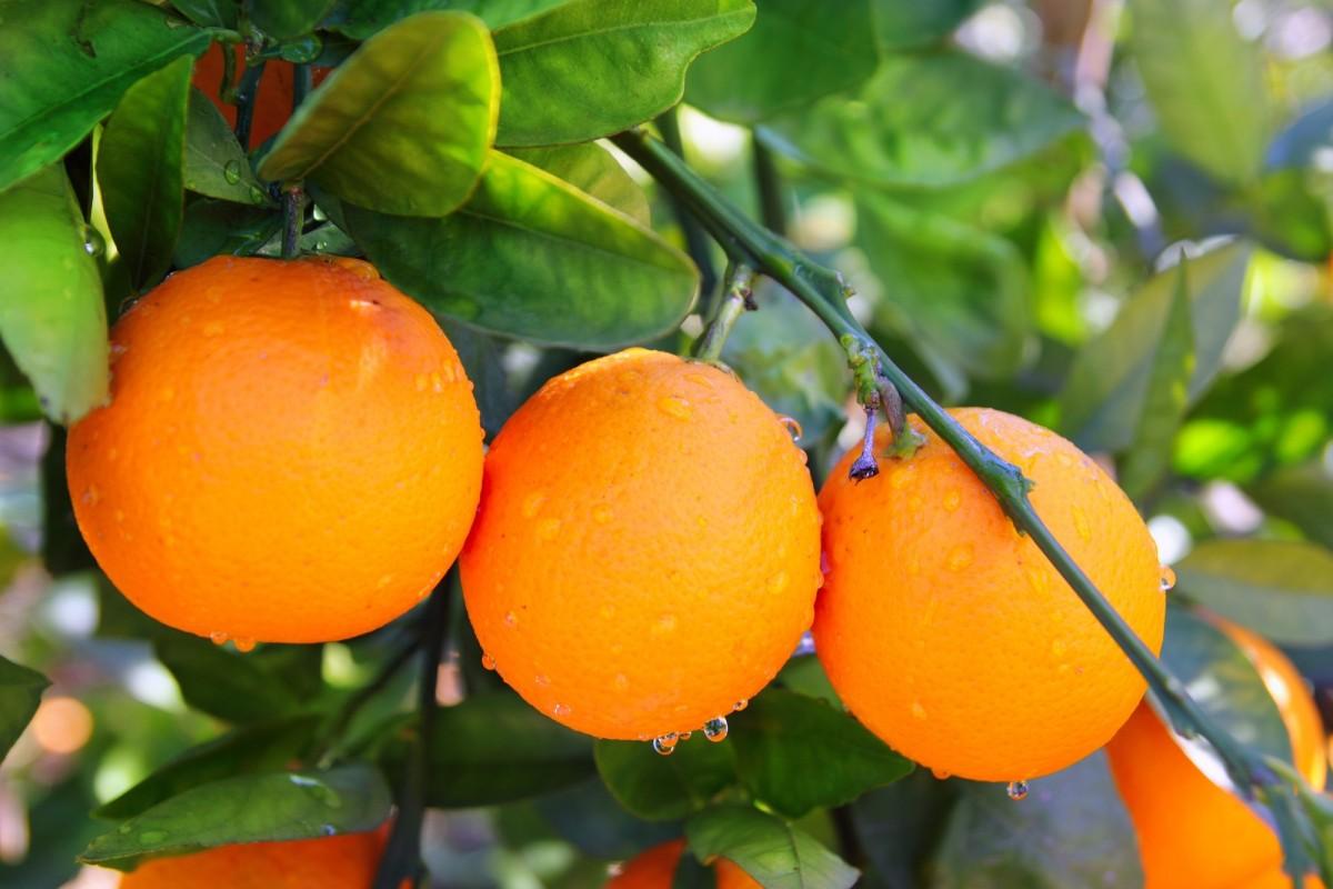 Pitääkö hedelmien sisältämää fruktoosia vältellä?