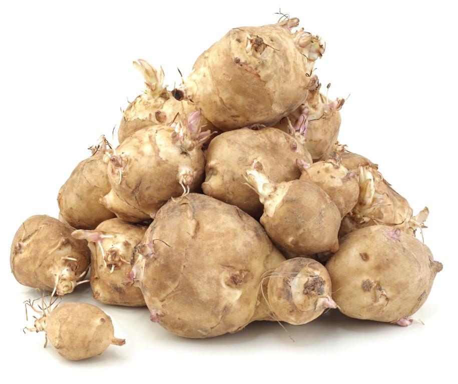 Heap of Sunchoke Vegetable, Helianthus tuberosus