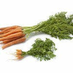 Fresh baby carrots  and large ones to see the difference in size on white background