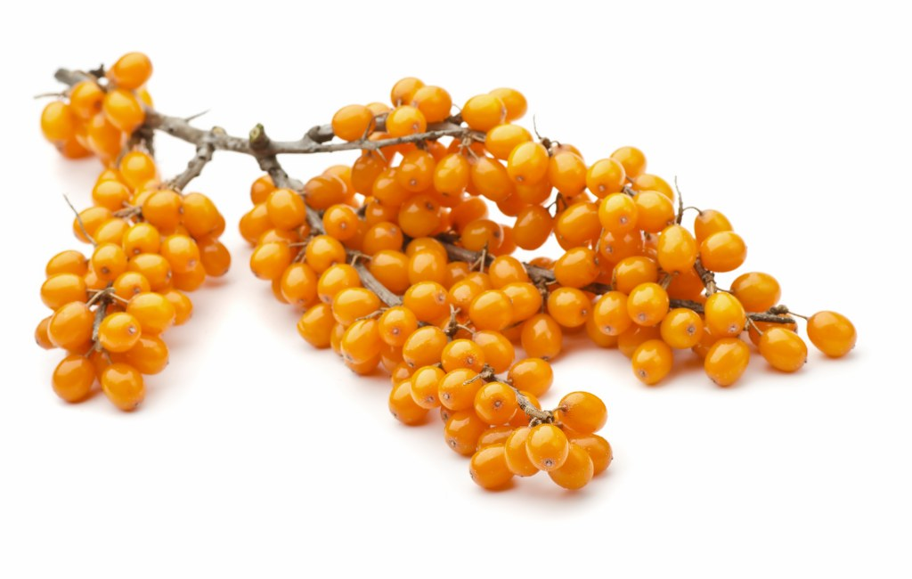 Branch of sea buckthorn berries isolated on white