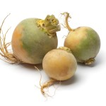 Yellow turnips on white background
